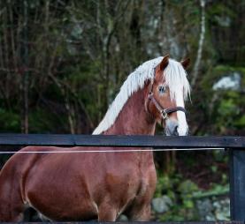 Hästar 2 jan-13 053