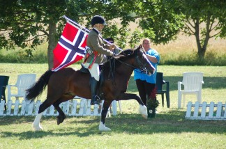 Plassens King Daniel, Overall Ridden Champion